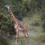 Wat een Giraf en een Jakhals met jouw Huwelijk te maken hebben